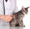 Ветеринарные клиники в Кулебаках